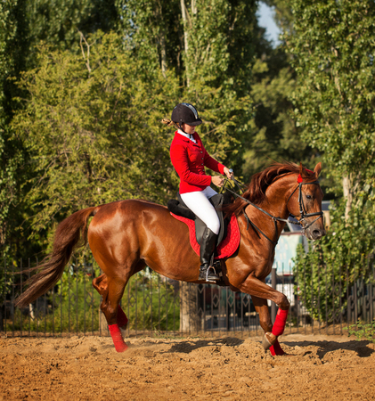A girl jockey rides a horse in a trot outdoors. A pedigree horse for equestrian sport.