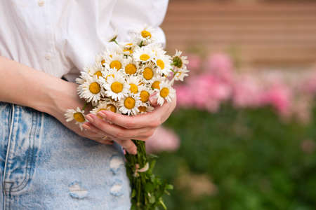 Close-up of cute little daisies bouquet of simple flowers in unrecognizable woman's hands on white background with copy space. Banco de Imagens