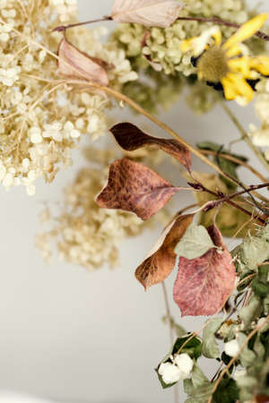 Dried flowers and leaves on white background. Close up. Educational still life for drawing.