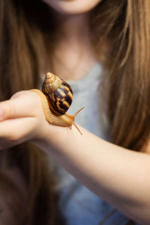 Unrecognizable little girl looking at snail achatina on her hands. Exotic pet. Concept of exploring the world and exploring wildlife