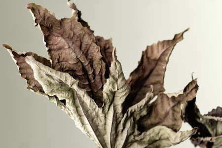 Dried leaves. Closeup. Background. Texture. Educational still life for drawing.