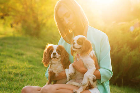 Caring breeder walks at sunset with two purebred pets. Cavalier King Charles Spaniel puppies for walk with owner warm summer day outdoors in backyard