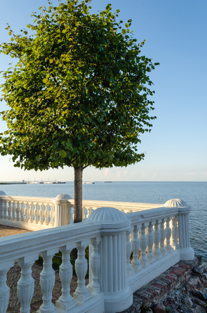 Lonely tree on a stone balcony on the sea background