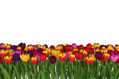 tulips isolated on white background: Colorful vibrant tulips 3D render illustration on isolated white background