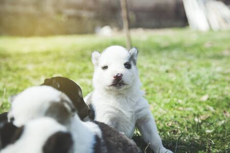 different color dogs in the green grass Stock fotó - 138472721