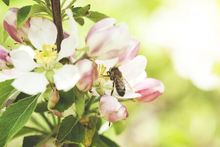 bee on flowers in tree and green background