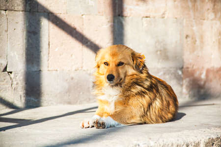 The dog is resting on the street and basking in the sun 免版税图像