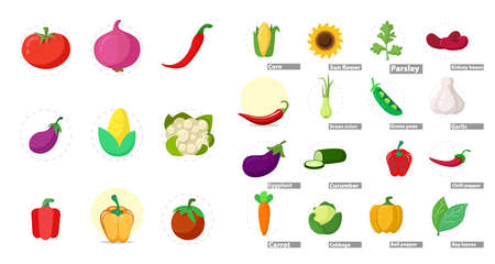 vegetables set with cucumber, garlic, bay leaves, eggplant, green peas, bell pepper, chili pepper, onion, parsley, tomato Illustration