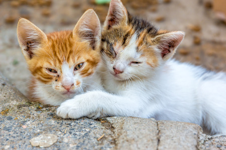 mewing: Cute Cats