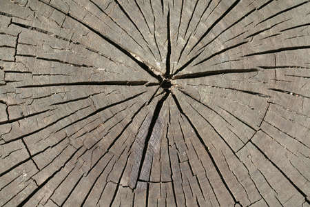 A natural background - old tree stump in closeup photo