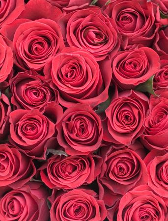 romantics: Roses background