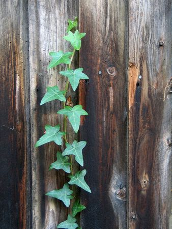 Plant and wooden fence photo