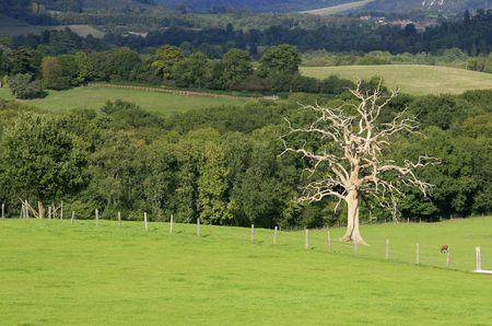 Oto�o paisaje con �rboles secos Foto de archivo - 570648