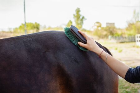 A woman combs and cleans a horse of dirt with a big brush. Brown horse on a background of blue sky. Horse care, love for animals.