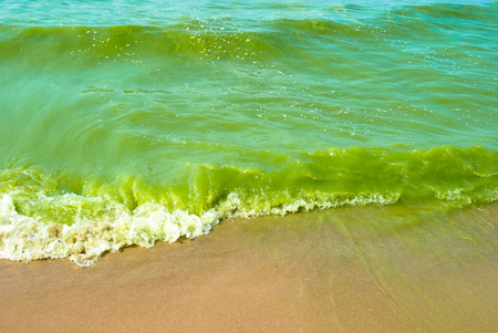 algal: green water Stock Photo