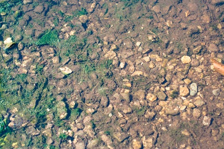 rock bottom: pond bottom with alga and stones, abstract texture