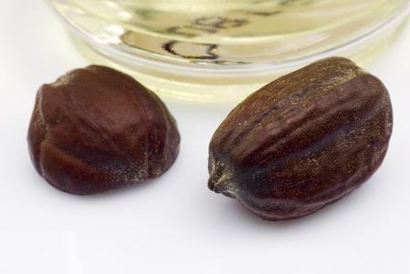 Jojoba seeds  Simmondsia chinensis  on withe beckground Archivio Fotografico