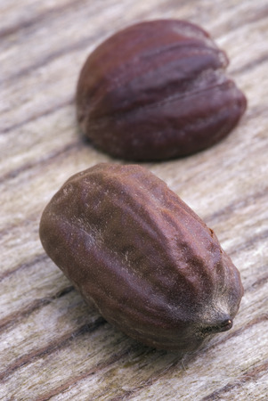seeds of jojoba  Simmondsia chinensis   with it is produced a oil used in cosmetics and other industries Stock fotó - 30107638