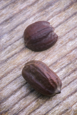 seeds of jojoba  Simmondsia chinensis   with it is produced a oil used in cosmetics and other industries