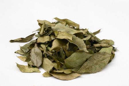 sweltering: Curry leaves (Murraya koenigii). oriental cuisine