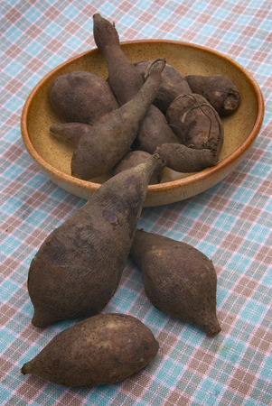 yacon: Fresh Yacon roots (smallanthus sonchifolius) on the table Stock Photo