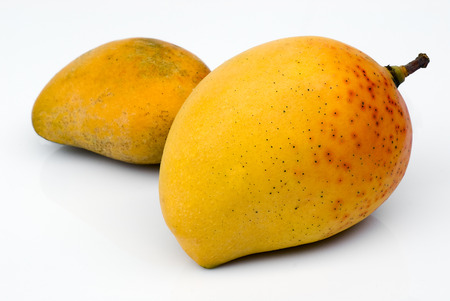 mango isolated:  Alphonso Mango, the king of mangoes (Mangifera indica)