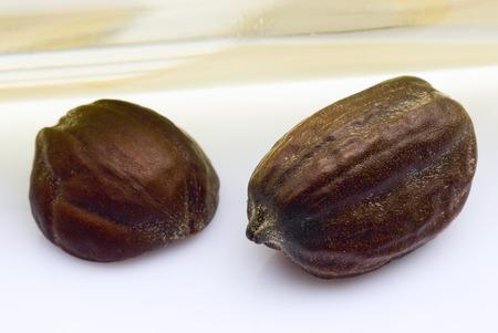 Jojoba seeds (Simmondsia chinensis) on white background Archivio Fotografico