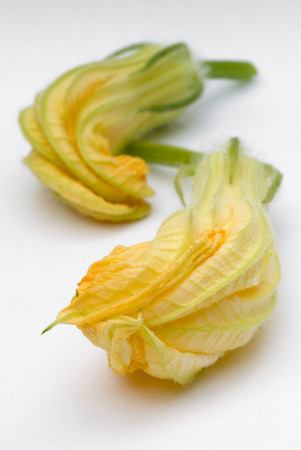 squash blossoms, flowers of pumpkin Clouse up