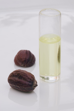 Jojoba (Simmondsia chinensis) seeds and oil on withe beckground