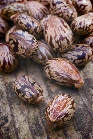 ricin: Beaucoup de graines de ricin couch� sur le plancher en bois