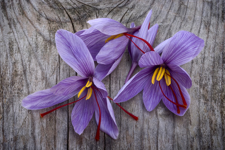 Saffron flowers (Crocus sativus) on wooden floor Archivio Fotografico