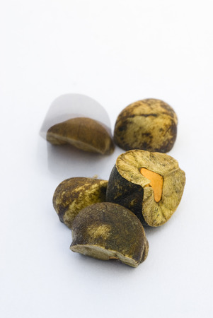 invaded: Mexican jumping beans. Sesbania pavoniana seeds invaded by larvae of a small moth (Cydia deshaisiana). Stock Photo