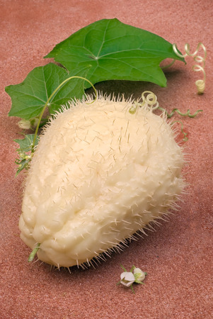chayote: The chayote (Sechium edule), fruit varieties thorny. Vegetable native to south america.