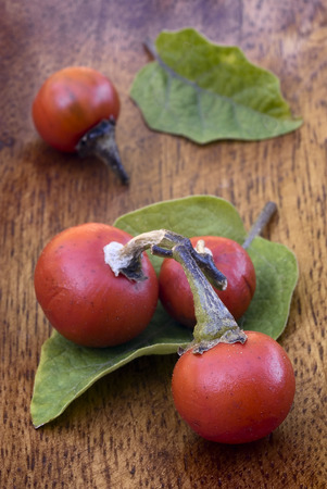 fijian: fruit and leaves of Cannibals Tomato (Solanum uporo).