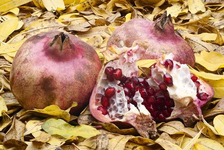 punica granatum: juice pomegranate fruit (Punica granatum) with autumn colors