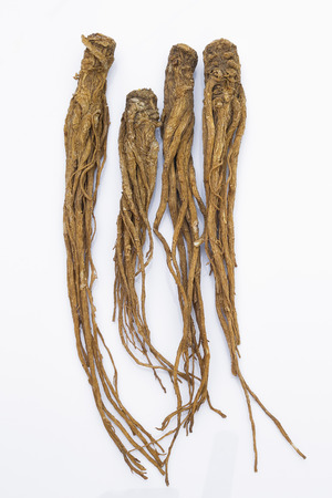 codonopsis roots: Dong Quai (Angelica sinensis)  on white background, also known as Dang Gui Ginseng. Chinese Herbal medicine (Radix Angelicae Sinensis) Stock Photo