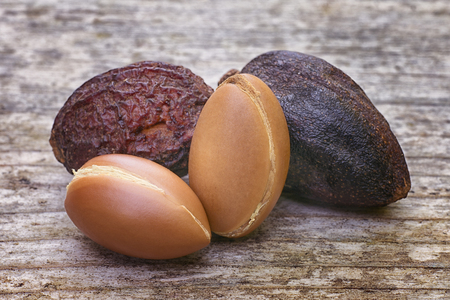 Argan fruit (Argania spinosa), nutsl, this original seed of Morocco is used in cosmetics Stock fotó - 64625832
