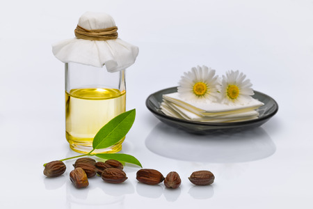 Jojoba (Simmondsia chinensis) leaves, seeds and oil on withe background