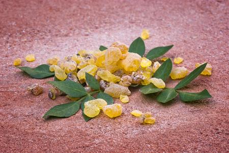 유향 (유향 Papyrifera), 수지와 잎, Etiopia에서 향.