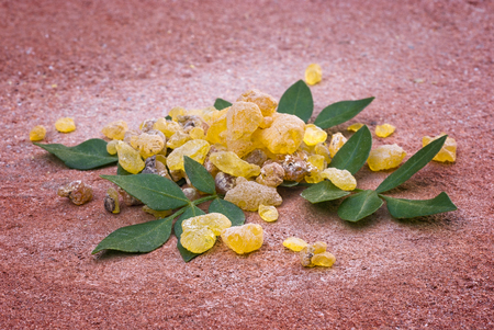 Frankincense (Boswellia Papyrifera), resin and leaves, Incense from Etiopia.