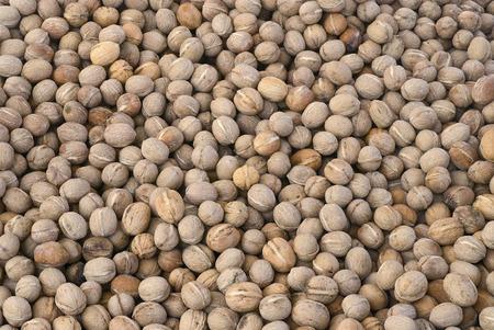 Walnuts background, texture of nuts. (Juglans regia)