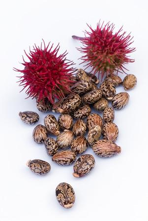 Many castor beans  (Ricinus communis), seeds, fruit, flower