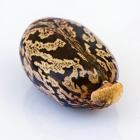 salut: Many castor beans  (Ricinus communis), seeds, fruit, flower