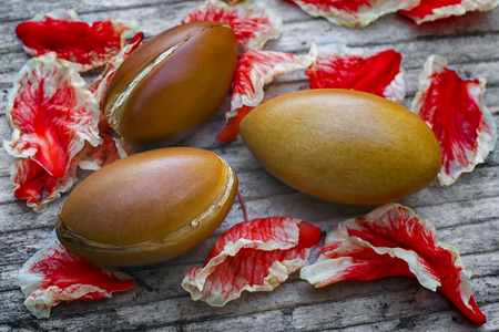 Argan fruit (Argania spinosa), nutsl, this original seed of Morocco is used in cosmetics
