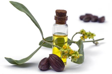 Jojoba (Simmondsia chinensis) olie, bladeren, bloem en zaden geïsoleerd op witheckground