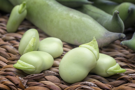 Broad beans (Vicia faba) in pods and seeds