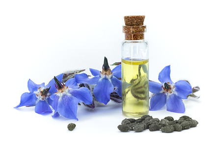 Borage oil (Borago officinalis); flowers and seeds on white background. Clouse Up