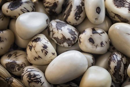 Vegetable ivory, tagua nuts (Phytelephas macrocarpa).processed seeds of ivory plant