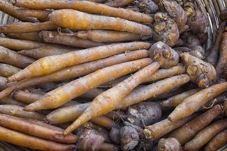 Finger root; Krachai (Boesenbergia rotunda) in pile; thai herb Archivio Fotografico