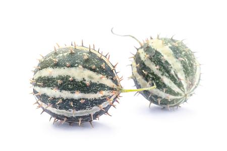 Paddy melon (Cucumis myriocarpus), wild spiny cucumber, exotic ornamental vegetable